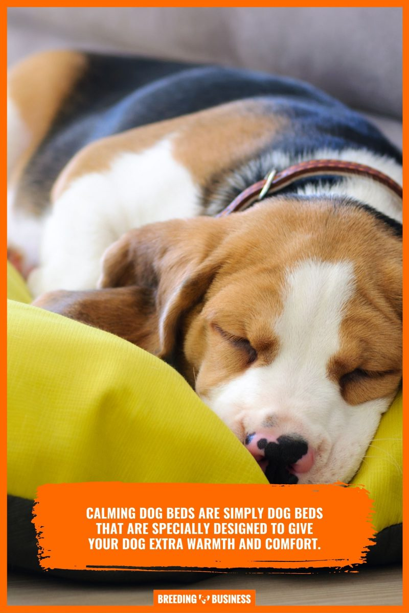 importance of giving the best comfort to your dog