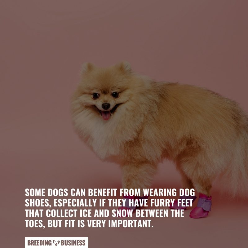benefits from dog shoes