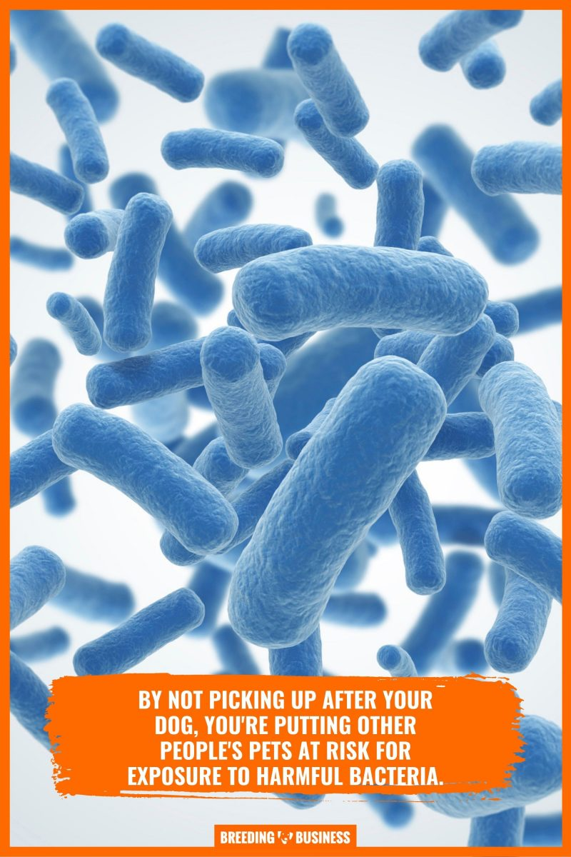 bacteria from dog poop