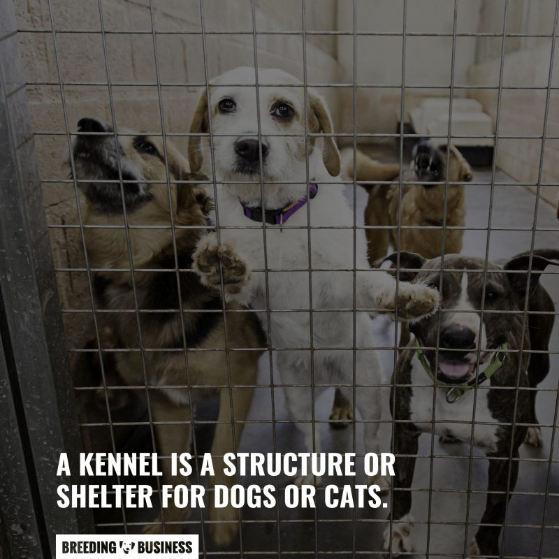 what are dog kennels