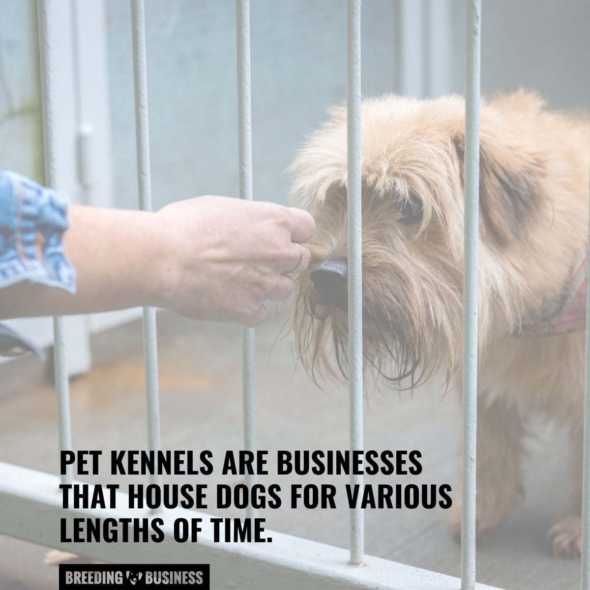 what pet kennels are