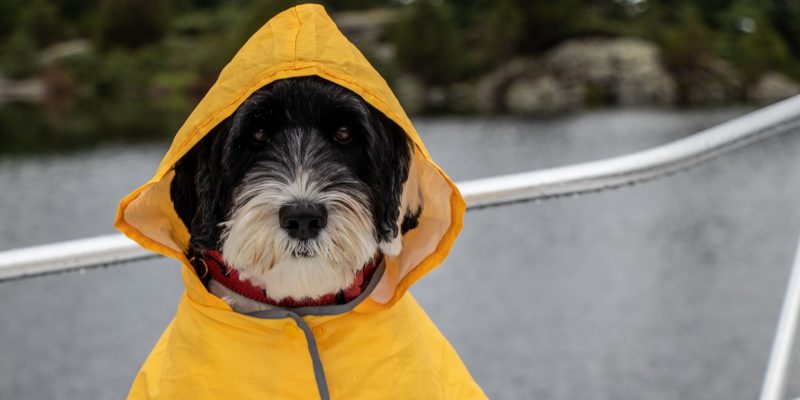 5 Best Waterproof Dog Raincoats With Hood