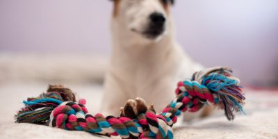 FInd out which rope toy is the best for  your dog!