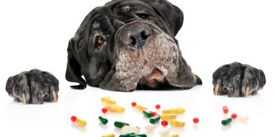 Find out what are the benefits that joint supplements can give your dog!