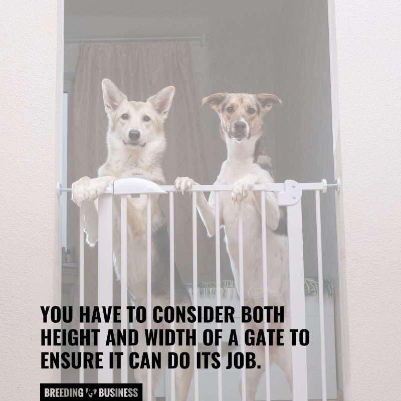 choose the right dog gate size