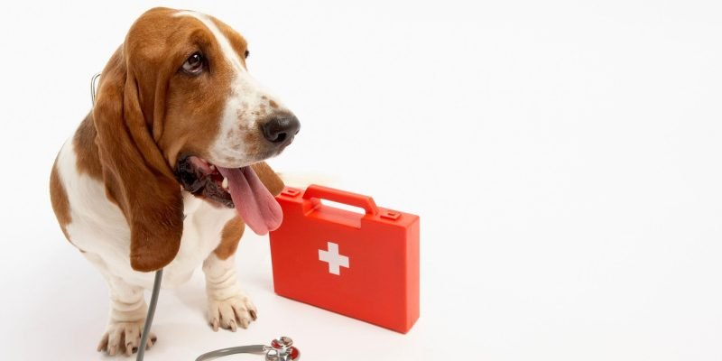 The Perfect Dog First Aid Kit — What's In It?