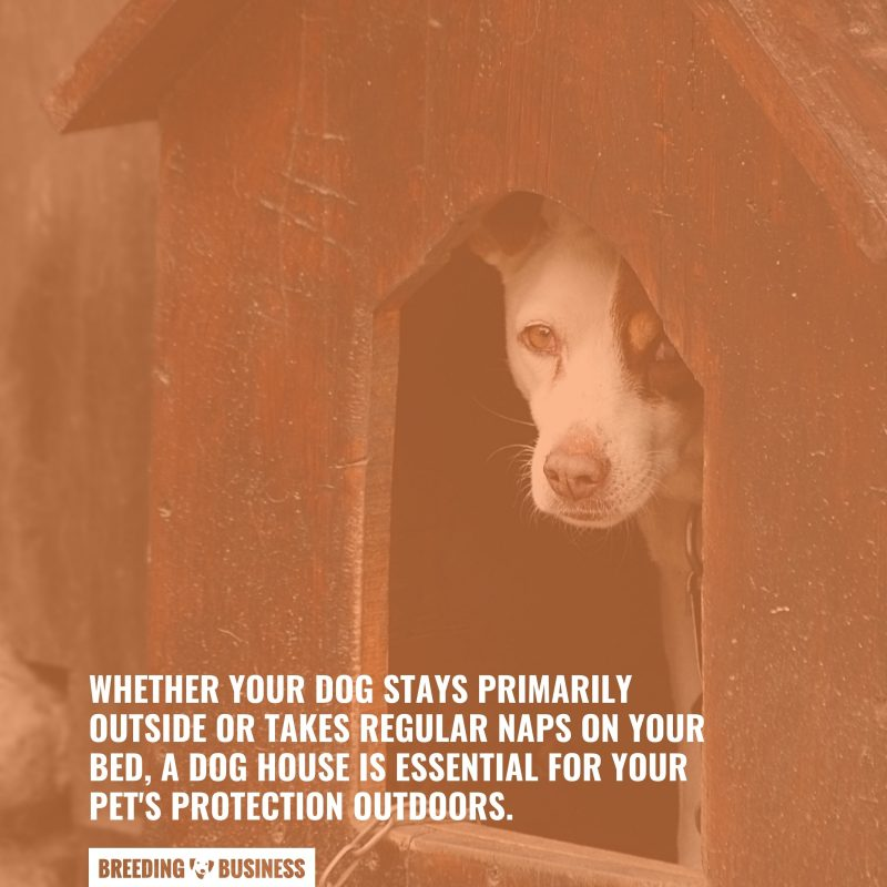 importance of dog houses