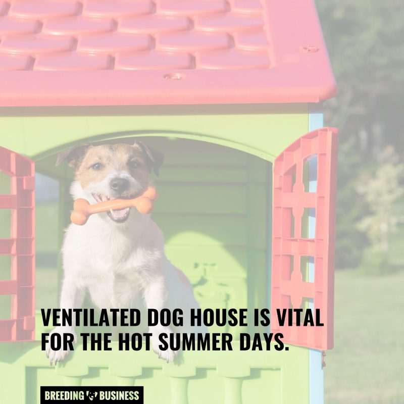 well ventilated dog house