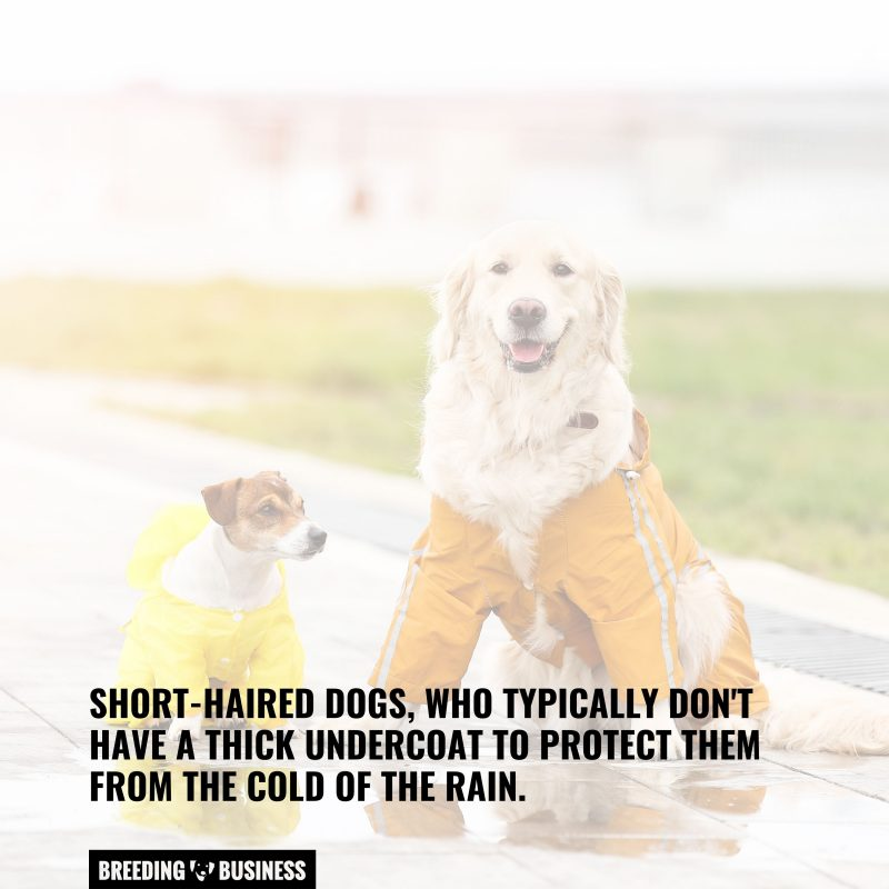 dog raincoats for short-haired dogs