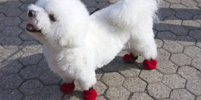 Find out what type of dog socks need to stay on!