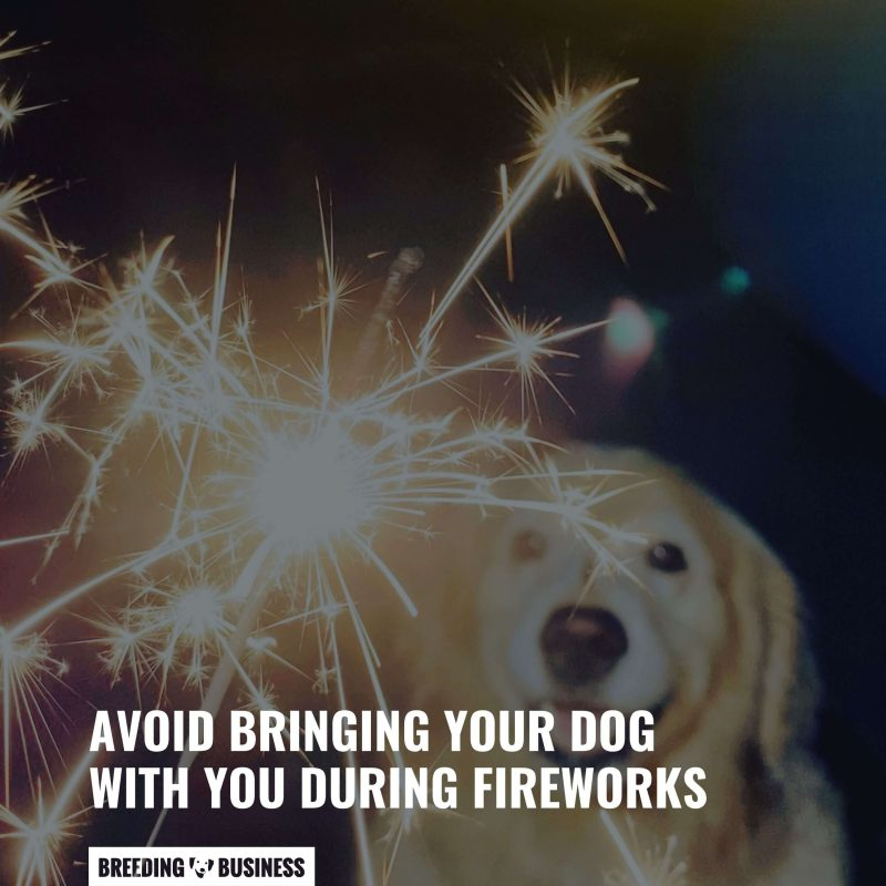 Avoid bringing pets to fireworks.