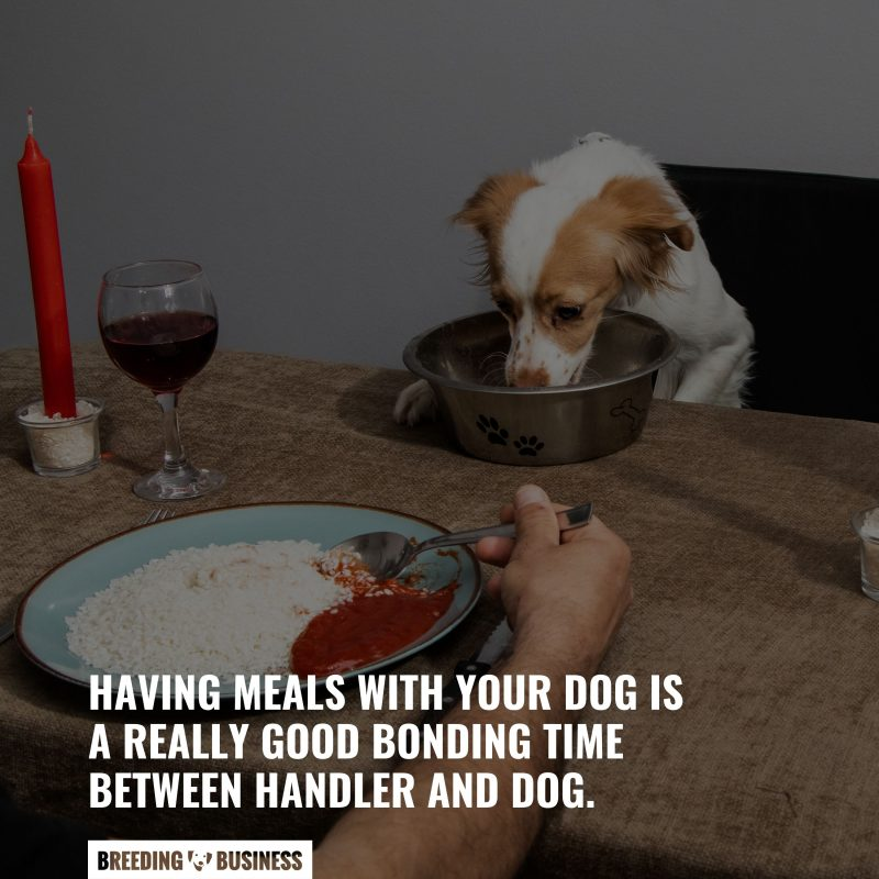eat meals with your dog