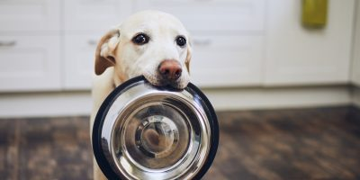FInd out why dogs beg for food and how to stop it!