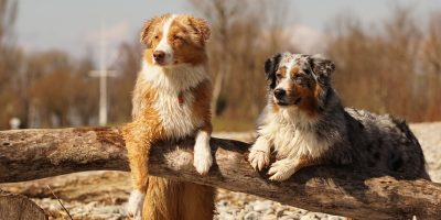How To Keep Dogs Cool Outside in The Summer