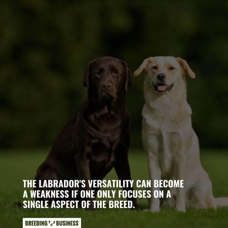 The versatility of Labradors