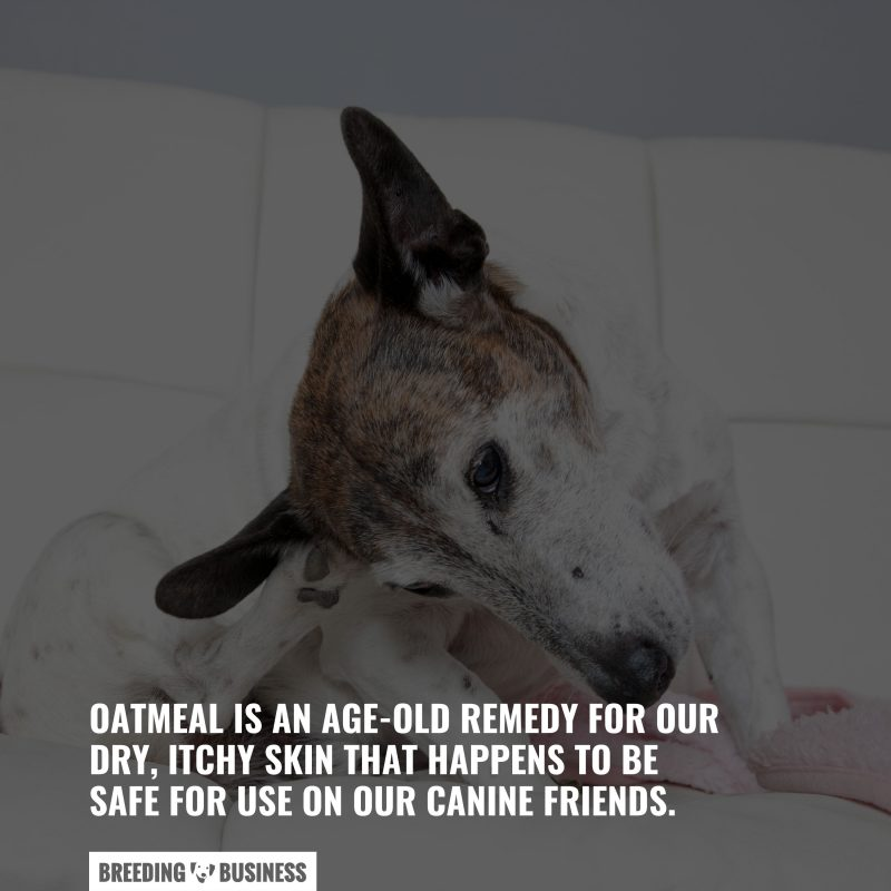 oatmeal for itching dogs