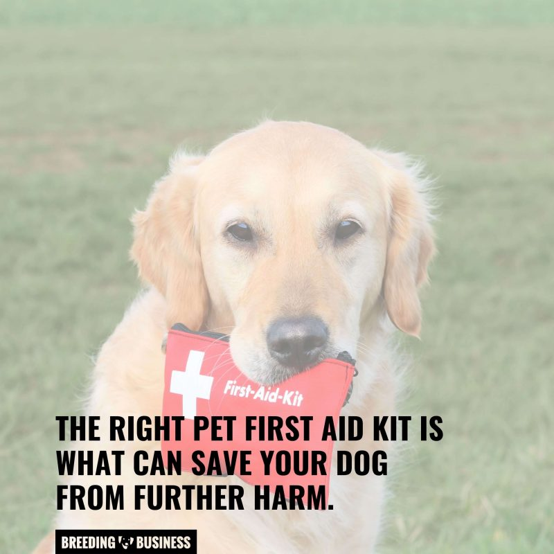 first aid kit with a labrador