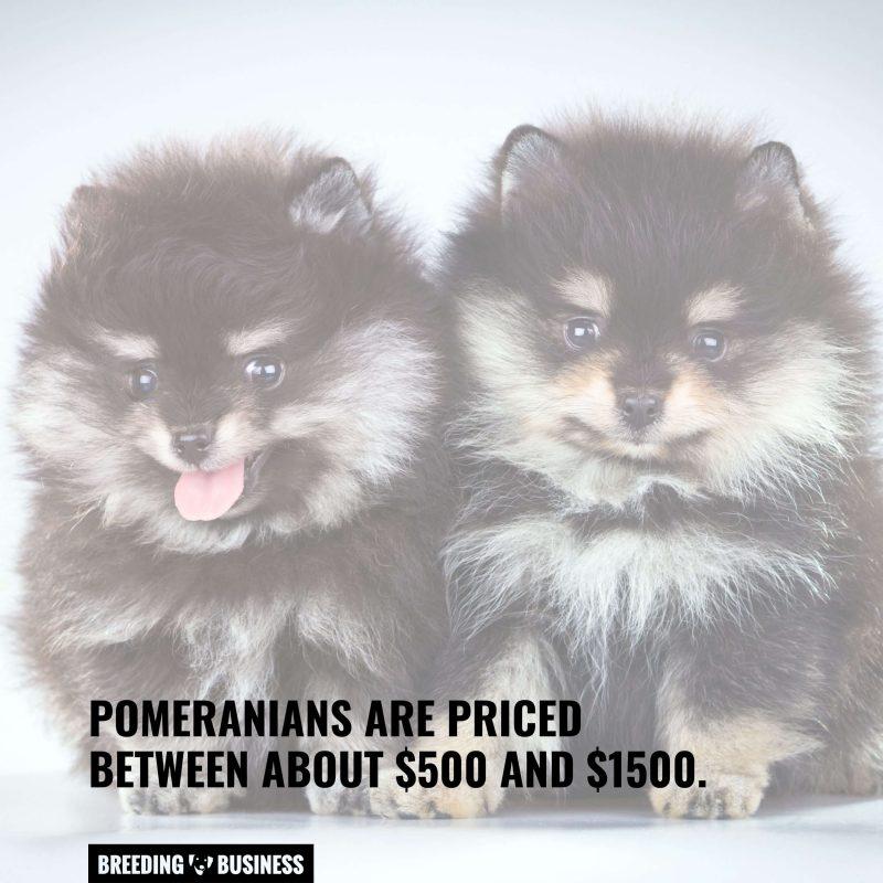 pomeranian puppies price range