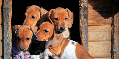 Puppies and kennels on social media.