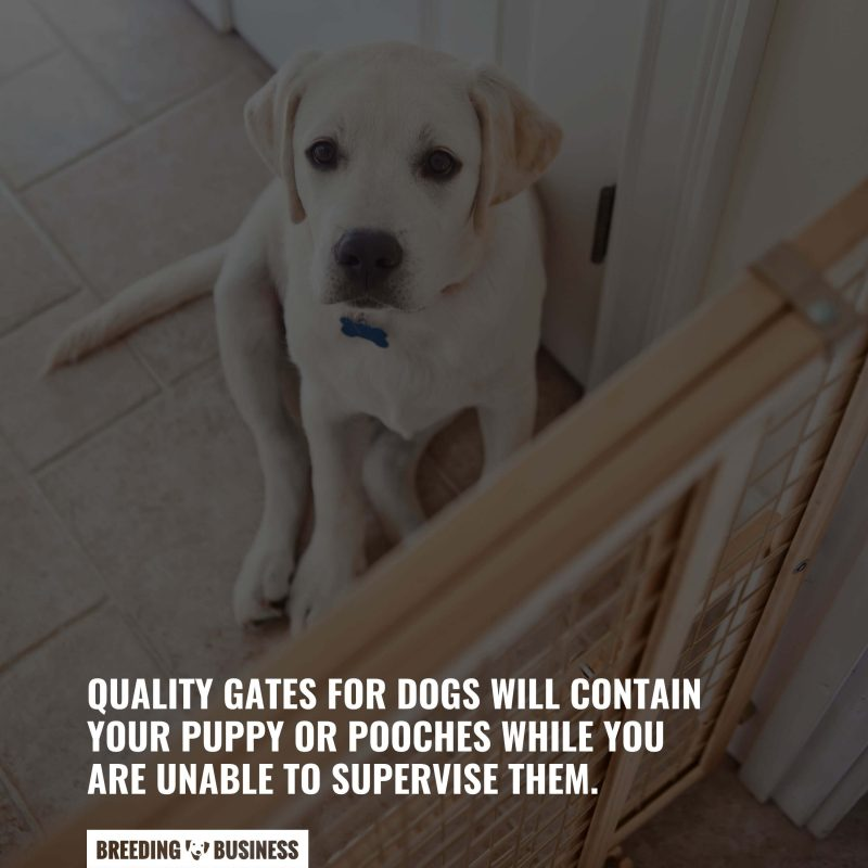 quality gates for dogs