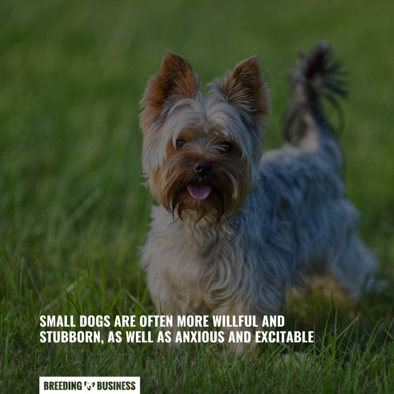 the trainability of small dogs
