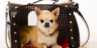 Find out whether your dog is comfier in soft sided crates!
