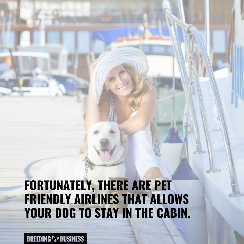 going on a vacation with your dog