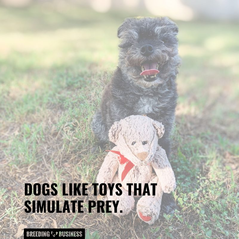 toy types dogs like
