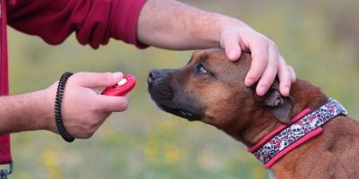 Find out the different types of dog training!