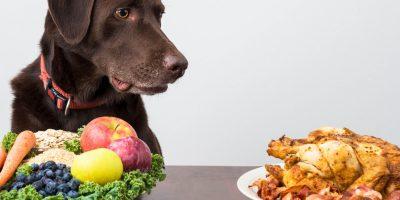 5 Best Vegan Dog Foods + Guide to a Dog Vegan Diet