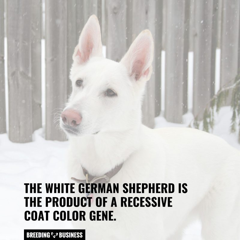 different coat color causes