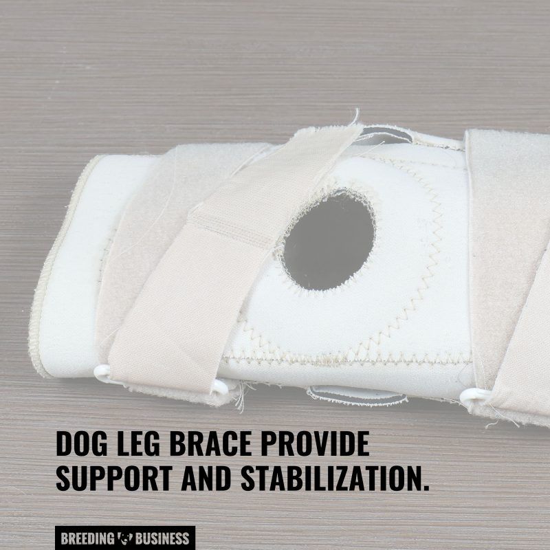the support knee braces give