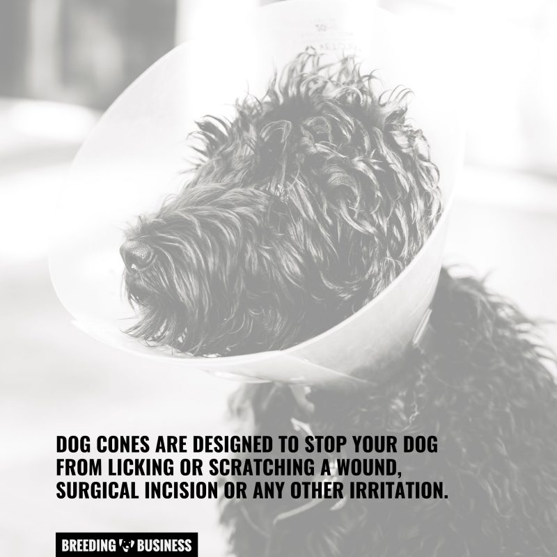 dogs need cones to recover