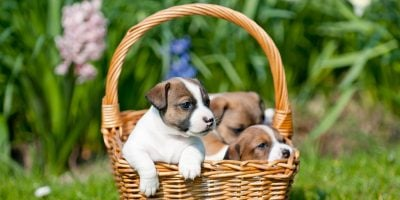 15 Best Dog Breeds To Sell – Low Maintenance, Healthy & High-Margin