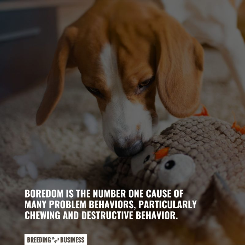dogs that are bored destroy toys