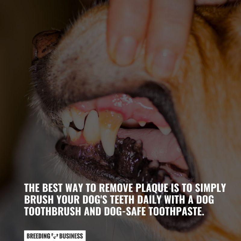 brushing your dog's teeth