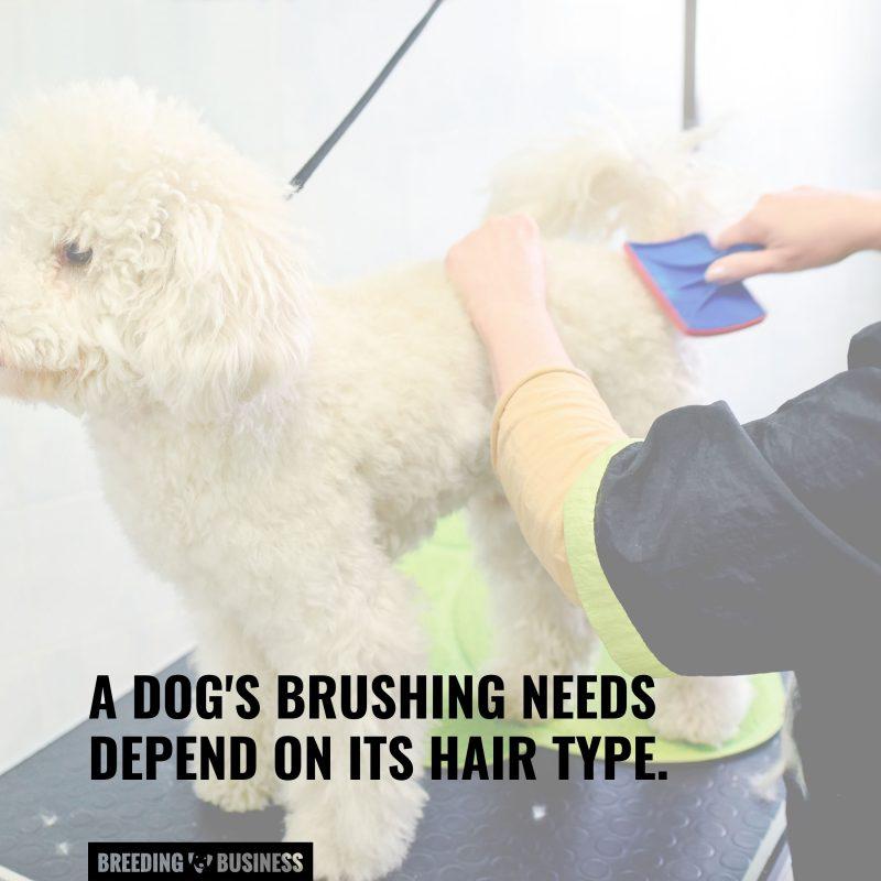 hair type brushes