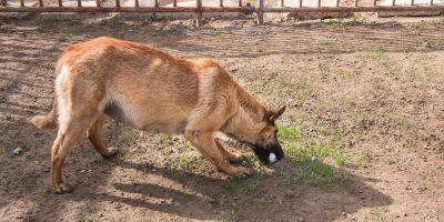 10 Common Female Dog Breeding Problems