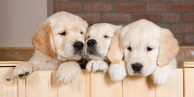 20 Dog Breeding Statistics You Didn't Know About