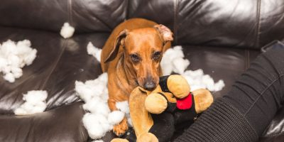 Why Do Dogs Destroy Toys