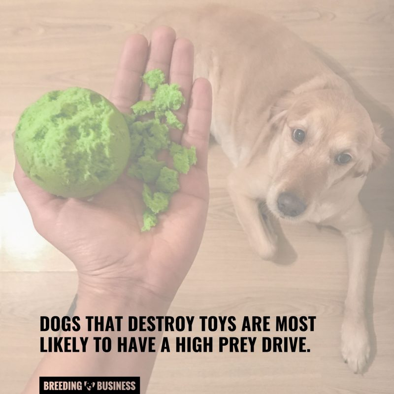 dogs with high prey drive