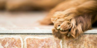 Dogs With Webbed Paws – Top Breeds, Science Behind It & FAQs