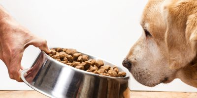 15 Best Dog Food For Working Dogs