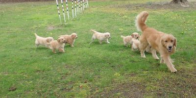 Find out everything you need to know about the negative effects of dog breeding.