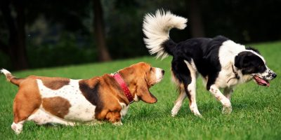 Find out why dogs smell each other.