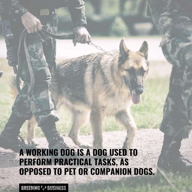 what a working dog is