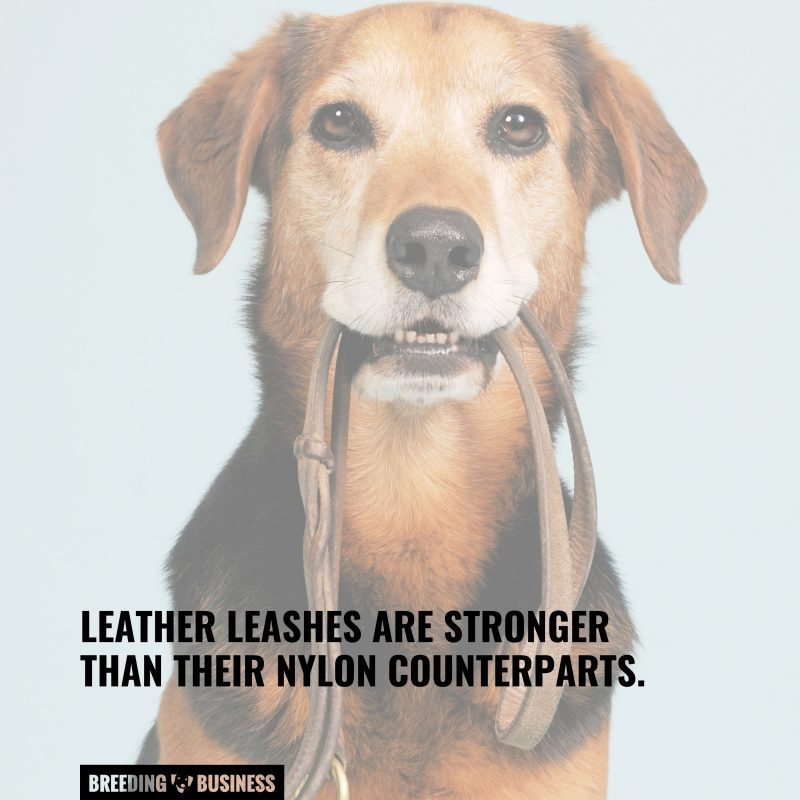 leather lead benefits
