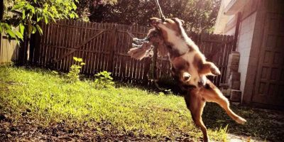 7 Best Spring Poles for Dogs