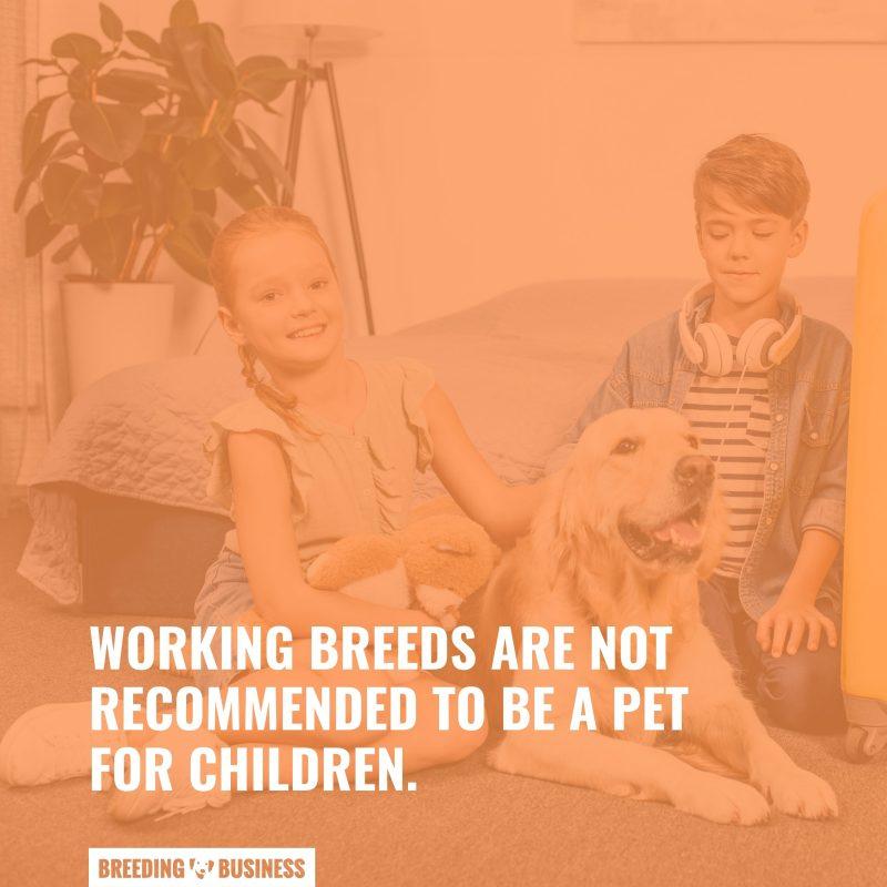 breeds for children pets
