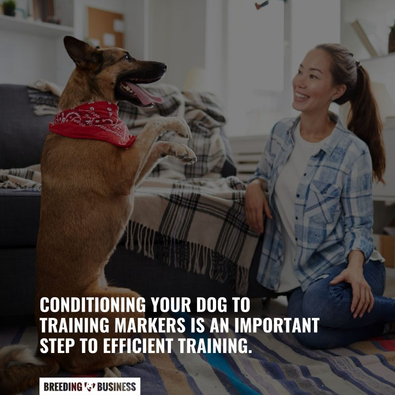 marker conditioning dogs